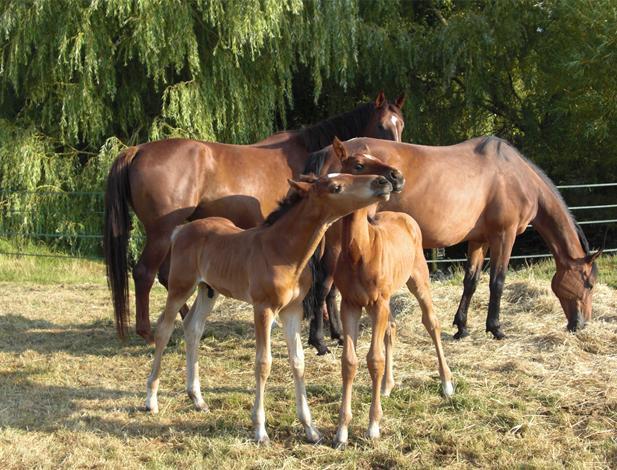 chevaux à vendre images